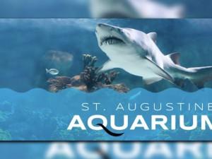 Aquarium_1482022184409_7378659_ver1.0